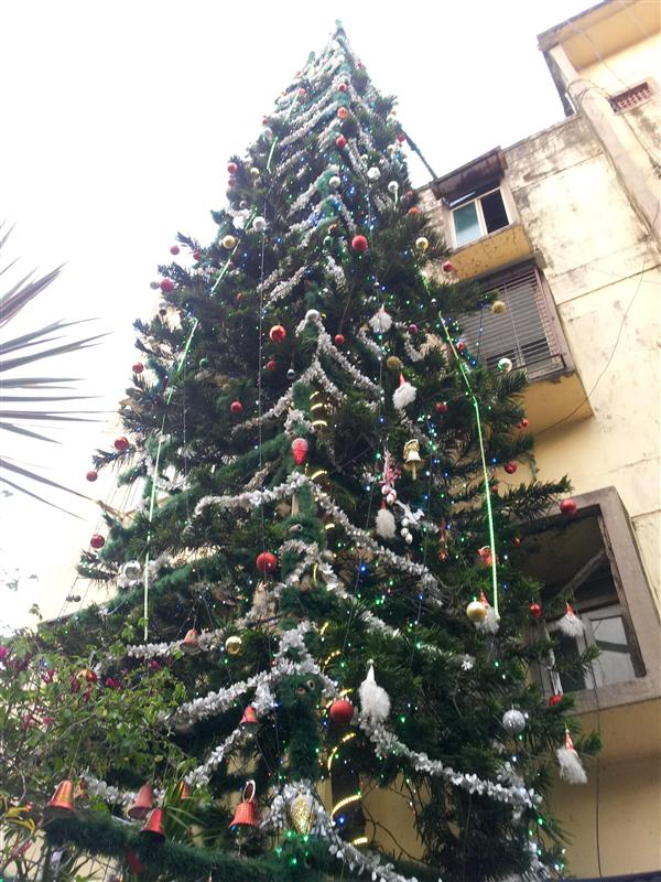 Ordinary Christmas Trees In India Part - 6: India Tallest, Fully Decorated, Natural Growing 56 Feet Tall Christmas Tree  In Adarsh Nagar, A Private Society In Worli, South-central Mumbai Ahead Of  ...